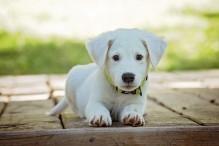 Dieta adecuada con el pienso natural para perros