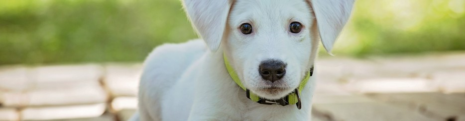 pienso-natural-para-perros-3